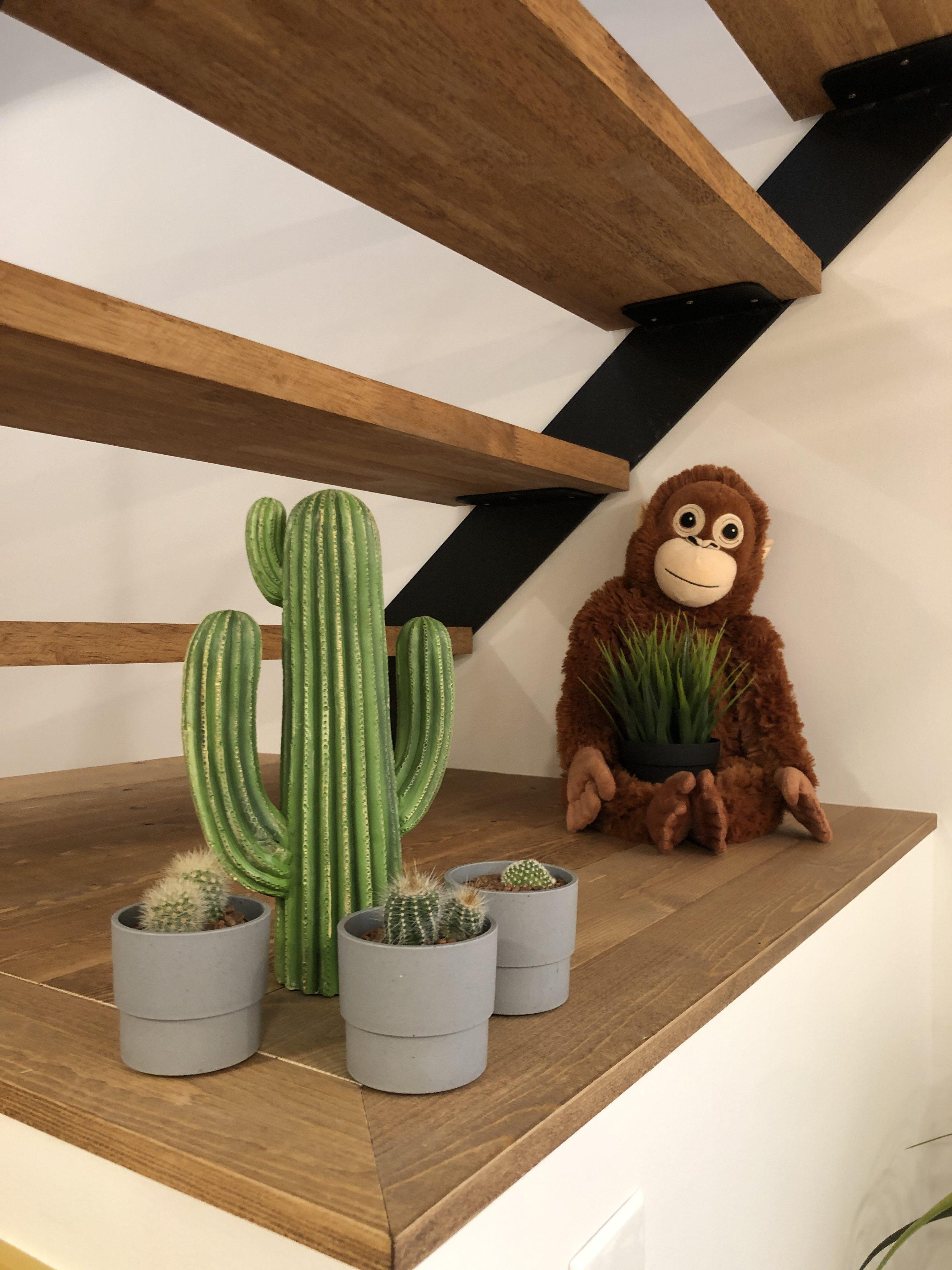 山梨県の工務店、未来建築工房とつくる注文住宅。|カフェスタイルの家とチンパンジーとサボテン